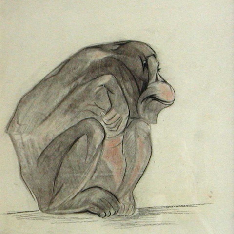 Jeune gorille de profil. 1930.